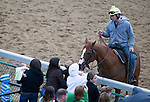 APRIL 30, 2015:  Fans pet a horse on the trackduring morning workouts at Churchill Downs in Louisville, Kentucky. Ting Shen/ESW/Cal Sport Media