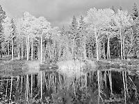 Black and white photography. The Kootani Forest captured reflecting in a pond. Even in black and white you can sense how dramatic the fall color.