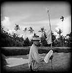 An old farmer herds ducks in a rice pattie on Bali.