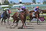 HALLANDALE BEACH, FL - APRIL 01:  #6 The Truth Or Else wth jockey Joel Rosario on board, wins the Sir Shackelton Stakes at Gulfstream Park on April 01, 2017 in Hallandale Beach, Florida. (Photo by Liz Lamont/Eclipse Sportswire/Getty Images)