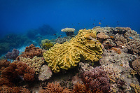 Corals on the Great Barrier Reef in Australia