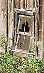 Old barn window and screen with berry bush growing on ground Oregon, window, Oregon, Pacific Ocean, Plains, woods, mountains, forest, desert, rain, Pacific Northwest,Window, barn window, barn window, Oregon, Ron Bennett Photography (c) Fine Art Photography by Ron Bennett, Fine Art, Fine Art photography, Art Photography, Copyright RonBennettPhotography.com © Fine Art Photography by Ron Bennett, Fine Art, Fine Art photography, Art Photography, Copyright RonBennettPhotography.com ©