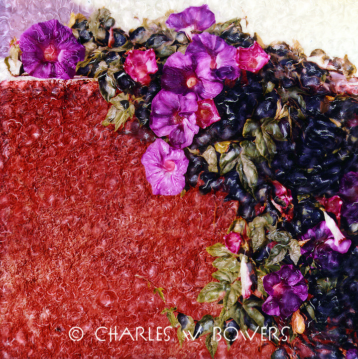 Morning glories wash the stucco with magenta accents that add a beautiful touch.
