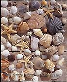 Interlitho, STILL LIFES, photos+++++,mussles,starfish,KL16386,#I# Stilleben, naturaleza muerta