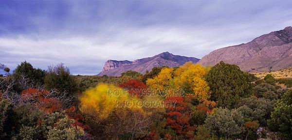 Sunrise on El Capitan and fall colors, Guadalupe Mountains National Park, Texas, USA, November 2005