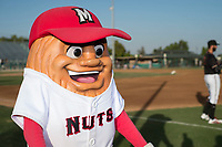 Modesto Nuts mascot Al the Almond interacts with fans before a California League game against the Lake Elsinore Storm at John Thurman Field on May 11, 2018 in Modesto, California. Modesto defeated Lake Elsinore 3-1. (Zachary Lucy/Four Seam Images)