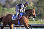 October 27, 2014: Mr Sexy exercises in preparation for the Breeders' Cup Sprint at Santa Anita Park in Arcadia, California on October 27, 2014. Zoe Metz/ESW/CSM
