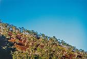 Col d'Amieu, savane à niaoulis