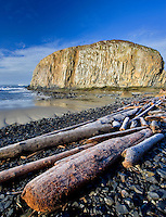 Seal rock with frost on driftwood. Oregon