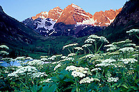 Queen Anne's Lace at Maroon Bells