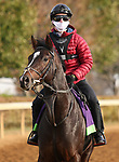 Kameko, trained by trainer Andrew M. Balding, exercises in preparation for the Breeders' Cup Mile at Keeneland Racetrack in Lexington, Kentucky on November 5, 2020.