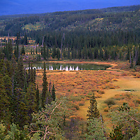 Boreal Forest along Alaska Highway in Northern BC, British Columbia, Canada