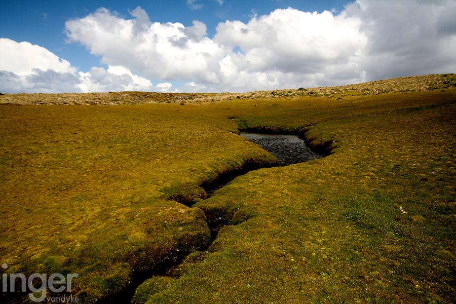 Auckland Island Landscape