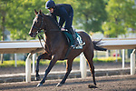 SHA TIN,HONG KONG-DECEMBER 08 : Max Dynamite,trained by Willie Mullins,exercises in preparation for the Hong Kong Vase at Sha Tin Racecourse on December 8,2017 in Sha Tin,New Territories,Hong Kong (Photo by Kaz Ishida/Eclipse Sportswire/Getty Images)