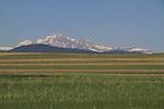 Longs Peak rises above wheat fields east of Boulder, Colorado, USA.