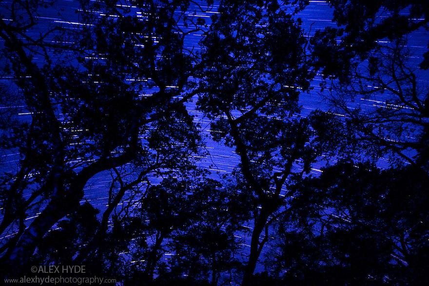 Long exposure of night sky through rainforest canopy showing star trails, Masoala Peninsula National Park, north east Madagascar.