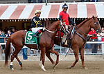 Hence in the post parade as Yoshida (no. 1), wins the Woodward Stakes (Grade 1), Sep. 1, 2018 at the Saratoga Race Course, Saratoga Springs, NY.    Ridden by  Joel Rosario, and trained by William Mott,  Yoshinda finished 2 lengths in front of Gunnevera (No. 9). (Bruce Dudek/Eclipse Sportswire)