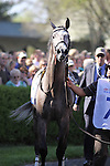 Paddy O'Prado in the Keeneland paddock for the 86th running of The Toyota Bluegrass Stakes. 04.10.2010