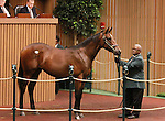 September 10, 2014: Hip #476 Cape Blanco (IRE) - Belterra colt consigned by Four Star Sales, sold for $450,000 at the Keeneland September Yearling Sale.   Candice Chavez/ESW/CSM