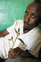 Djibouti. Djibouti province. Djibouti. Syndicat des chauffeurs de taxi (cab drivers syndicate house). A taxi driver holds khat leaves in his hand. Khat is a flowering plant native to tropical East Africa and contains the alkaloid cathinone, an amphetamine-like stimulant which causes excitement and euphoria. Khat is one of the few commodities that is traded daily and serves as a type of speed when chewed, Djiboutian men usualy chew in the afternoon hours. Khat is considered as a drug which abuse can produce mild to moderate psychic dependence. © 2006 Didier Ruef