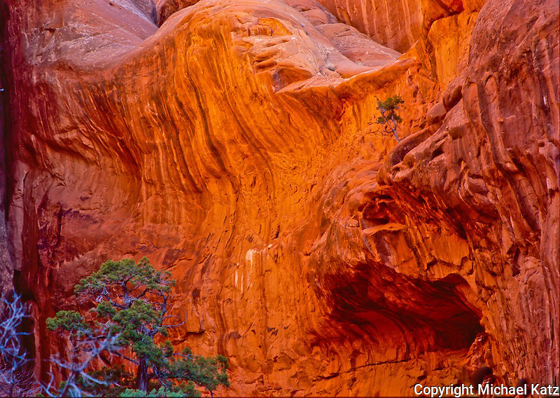 Juniper and Sandstone in dawn light, Arches NP