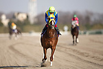 FUCHU,JAPAN-FEB 21: Air Spinel (2nd) is post parading before the February Stakes at Tokyo Racecourse on February 21,2021 in Fuchu,Tokyo,Japan. Kaz Ishida/Eclipse Sportswire/CSM