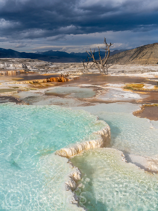This is the upper boardwalk section of Mammoth Hot Springs in Yellowstone National Park.  For me, this part of Mammoth Hot Springs and the Prismatic pools are the most beautiful part of Yellowstone.