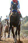 """ARCADIA, CA  OCTOBER 2: #5 Medina Spirit, ridden by John Velazquez, in the stretch of the Awesome Again (Grade 1) Breeders Cup """"Win and You're In Classic Division"""" on October 2, 2021 at Santa Anita Park in Arcadia, CA.(Photo by Casey Phillips/Eclipse Sportswire/CSM)"""