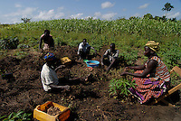 "Afrika Uganda Norduganda Kitgum ,  Fluechtlinge des Buergerkrieg zwischen LRA und Regierungstruppen , kehren nach Friedensabkommen zurueck in ihre Doerfer, bauen Haeuser und bestellen die Felder, Anbau und Ernte von Erdnuesse  - laendliche Entwicklung Frieden Menschen   Afrikaner afrikanisch xagndaz | .Africa Uganda Kitgum , refugees of civil war between LRA and Ugandanian army return back to their villages after the peace negotiation and start house building farming etc  - rural development agriculture foreign aid refugee peace | [ copyright (c) Joerg Boethling / agenda , Veroeffentlichung nur gegen Honorar und Belegexemplar an / publication only with royalties and copy to:  agenda PG   Rothestr. 66   Germany D-22765 Hamburg   ph. ++49 40 391 907 14   e-mail: boethling@agenda-fototext.de   www.agenda-fototext.de   Bank: Hamburger Sparkasse  BLZ 200 505 50  Kto. 1281 120 178   IBAN: DE96 2005 0550 1281 1201 78   BIC: ""HASPDEHH"" ,  WEITERE MOTIVE ZU DIESEM THEMA SIND VORHANDEN!! MORE PICTURES ON THIS SUBJECT AVAILABLE!! ] [#0,26,121#]"