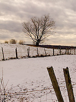 Single tree in snow covered fenced field<br />