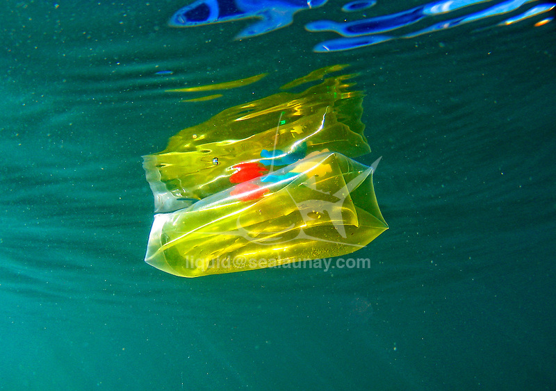 Yellow transparent children toy floating and causing water pollution.<br /> Aluminium foil floating and causing water pollution.<br /> Water pollution is largely caused by human activity and has had a major impact on our local waterways and their ability to be healthy and function naturally. Water pollution, by the release of waste products and contaminants into surface runoff into river drainage systems, leaching into groundwater, liquid spills, wastewater discharges, eutrophication and littering.<br /> Pollution is the introduction of contaminants into an environment that causes instability, disorder, harm or discomfort to the ecosystem i.e. physical systems or living organisms. Pollution can take the form of chemical substances, or energy, such as noise, heat, or light. Pollutants, the elements of pollution, can be foreign substances or energies, or naturally occurring; when naturally occurring, they are considered contaminants when they exceed natural levels. Pollution is often classed as point source or nonpoint source pollution.