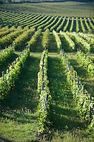 Vineyards of  Sopron, Hungary
