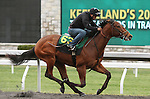 April 03, 2014: Hip 63 Unbridled's Song - Wildcat Heiress consigned by McCauley Farms worked 1/8 in 10:4.  Candice Chavez/ESW/CSM