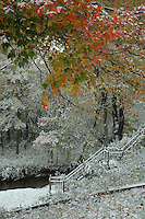Winter arrived a bit early in Bangor and dusted the colored leaves like powdered sugar.