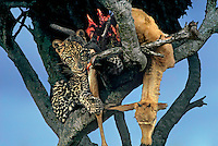Wildlife: African wildlife