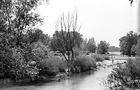 Parco del Ticino  presso Motta Visconti (provincia di Milano) --- Park of Ticino river near Motta Visconti (Province of Milan)