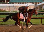 LOUISVILLE, KY - APRIL 27: Lewis Bay (Bernardini x Summer Raven, by Summer Squall) gallops with exercise rider Gian Cueva in preparation for the Kentucky Oaks at Churchill Downs, Louisville KY. Owner Alpha Delta Stables, trainer Chad C. Brown. (Photo by Mary M. Meek/Eclipse Sportswire/Getty Images)