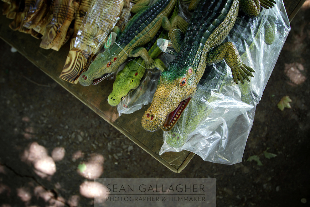 Models of The Chinese Alligator (Alligator sinensis), Anhui Research Center for Alligator Reproduction. Only 120 individuals remain in the wild in China as a result of wetlands reclamation. Xuancheng City, Anhui Province. China. 2010