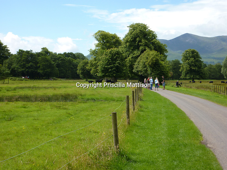 County Kerry, Republic of Ireland - July 19, 2010:  Visitors congregate on a road through a cow meadow in Killarney National Park.