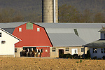 barn and horse team in spring, Amish