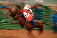 Bronco rider at a rodeo.