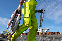 Gary Spieskie carries sockeye salmon after picking them out of gillnets on a setnet site in Ekuk, Alaska on July 4, 2019. The average price paid to fishermen this year for sockeye salmon was $1.35 per pound. Sockeye is a highly valued species of salmon known for its red meat and steaklike quality. (Photo by Karen Ducey)