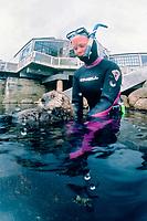 California Southern sea otter, Enhydra lutris nereis, endangered species, SORAC volunteer outside of Monterey Bay Aquarium building, taking out to the ocean, California cr