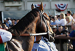 June 8, 2013. Belmont contender Orb before the race. Palace Malice, Mike Smith up, wins the Belmont Stakes at Belmont Park, Elmont, New York. Trainer is Todd Pletcher (Joan Fairman Kanes/Eclipse Sportswire)