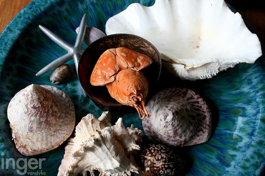 Sea Treasures at the Tongan Beach Resort, Tonga