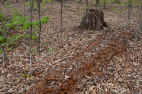 Cranberry Hill, West Virginia. Decaying Tree Trunk.  Nature Recycling Nutrients.