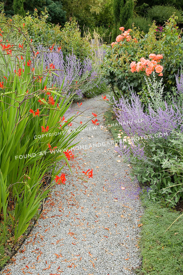 Red crocosmia, purple Russian sage, and pink roses line a curving stone path in this autumn scene.