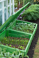 Cold frame with top open with young vegetables