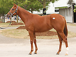 11 September 2010.  Hip #13  Ghostzapper - Azeri filly, consigned by Hill n'Dale..