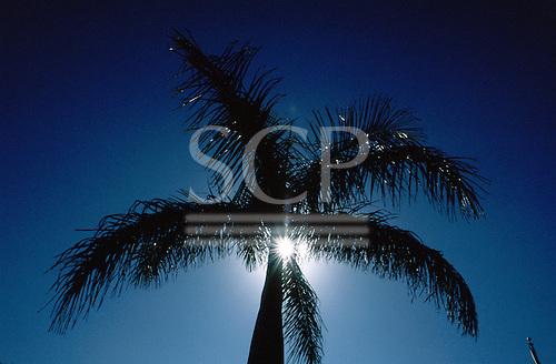 Florida, USA. Palm tree silhouetted against silver sunburst at Holiday Isle Resort on Isla Morada.